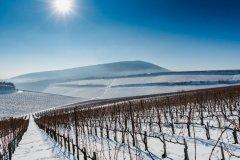 vince-nap-havas-szoloterulet